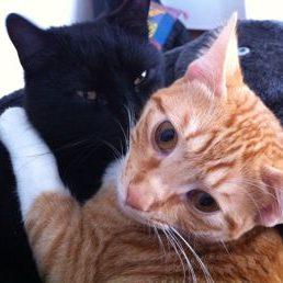 Fritz i Mic 1